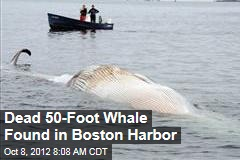 Dead 50-Foot Whale Found in Boston Harbor