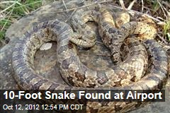 10-Foot Snake Found at Airport