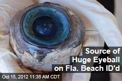 Source of Huge Eyeball on Fla. Beach ID&amp;#39;d