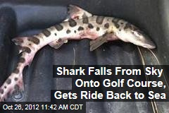 Shark Falls From Sky Onto Golf Course, Gets Ride Back to Sea