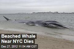 Beached Whale Near NYC Dies