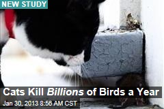 Cats Kill Billions of Birds a Year