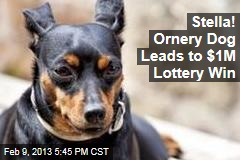 Stella! Ornery Dog Leads to $1M Lottery Win