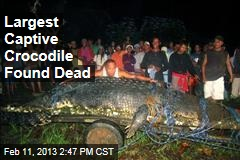 Largest Captive Crocodile Found Dead