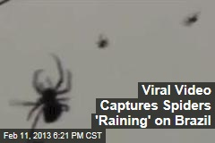 Viral Video Captures Spiders 'Raining' on Brazil