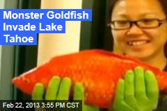 Monster Goldfish Invade Lake Tahoe