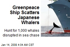Greenpeace Ship Scatters Japanese Whalers