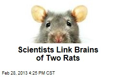 Scientists Link Brains of Two Rats