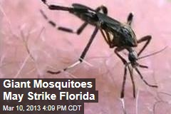 Giant Mosquitoes May Strike Florida