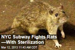 NYC Subway Fights Rats &amp;mdash;With Sterilization