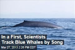 In a First, Scientists Track Blue Whales by Song
