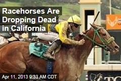 Racehorses Are Dropping Dead in California