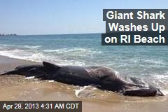 Giant Shark Washes Up on RI Beach