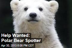 Help Wanted: Polar Bear Spotter
