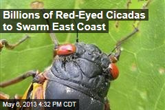 Billions of Red-Eyed Cicadas to Swarm East Coast