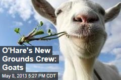 O'Hare's New Grounds Crew: Goats