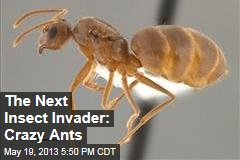 The Next Insect Invader: Crazy Ants