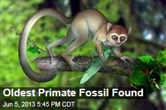 Oldest Primate Fossil Found