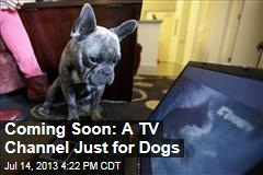 Coming Soon: A TV Channel Just for Dogs