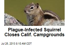 Plague-Infected Squirrel Closes Calif. Campgrounds