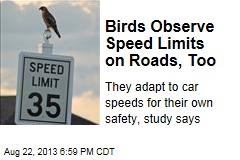 Birds Observe Speed Limits on Roads, Too