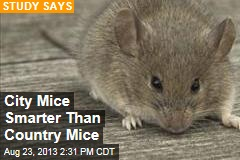 City Mice Smarter Than Country Mice