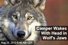 Camper Wakes With Head in Wolf's Jaws