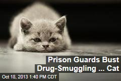 Prison Guards Bust Drug-Smuggling ... Cat