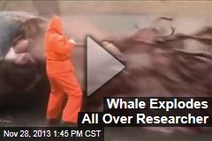 Whale Explodes All Over Researcher