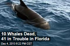 10 Whales Dead, 41 in Trouble in Florida