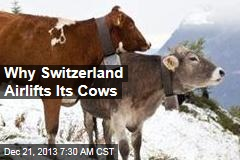 Why Switzerland Airlifts Its Cows