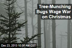Tree-Munching Bugs Wage War on Christmas