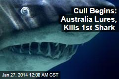 Aussies Launch Shark Cull to Protect Swimmers