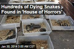 Hundreds of Dying Snakes Found in Hoarder's Home