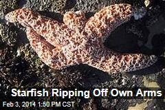 Starfish Ripping Off Own Arms
