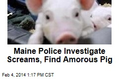 Maine Police Investigate Screams, Find Amorous Pig