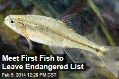 Meet First Fish to Leave Endangered List