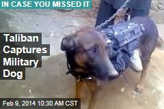 Taliban Captures Military Dog