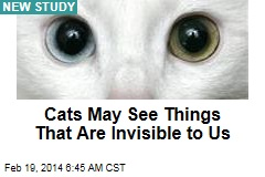 Cats May See Things That Are Invisible to Us