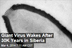 Giant Virus Revives After 30,000 Years