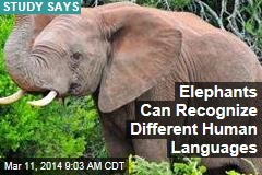Elephants Can Recognize Different Human Languages