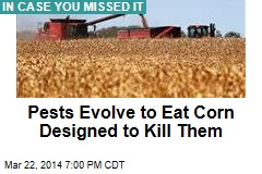 Pests Evolve to Eat Corn Designed to Kill Them