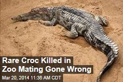Rare Croc Dies During Zoo Hanky Panky