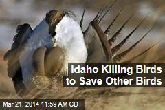 Idaho Killing Birds to Save Other Birds