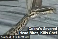Cobra's Severed Head Bites, Kills Chef