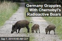 Germany Grapples With Chernobyl's Radioactive Boars