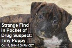 Strange Find in Pocket of Drug Suspect: Tiny Puppy
