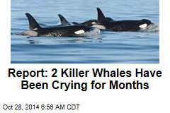 Report: 2 Killer Whales Have Been Crying for Months