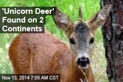 'Unicorn Deer' Found on 2 Continents