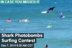 Shark Photobombs Surfing Contest